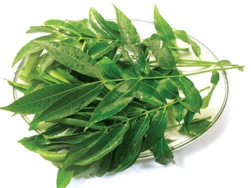Cách trị mụn ở cằm bằng lá trà xanh